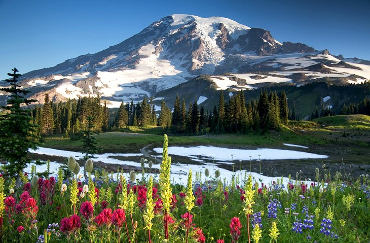 Mount Ranier snow capped mountain when flowers are in bloom